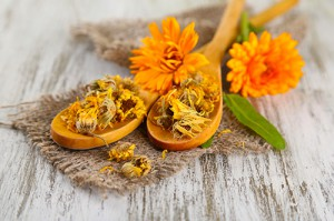 Calendula for pet skin