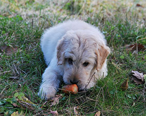 Essential vitamins and minerals for dogs