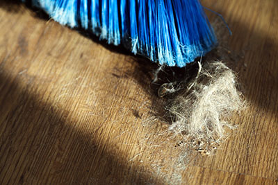 8 Easy Tips to Banish Pet Fur