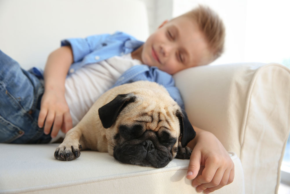 Pugs are great cuddlers