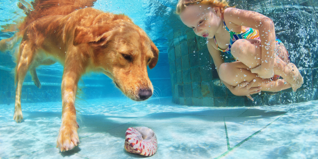 Can All Dogs Swim Naturally
