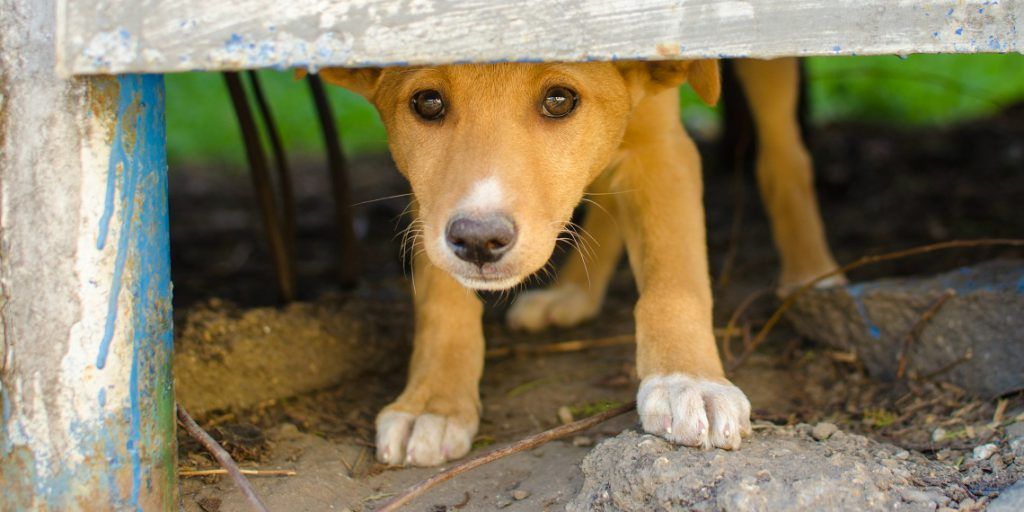 Could Your Dog Be Anxious? Here are Five Ways to Recognize and Help Your Dog Naturally