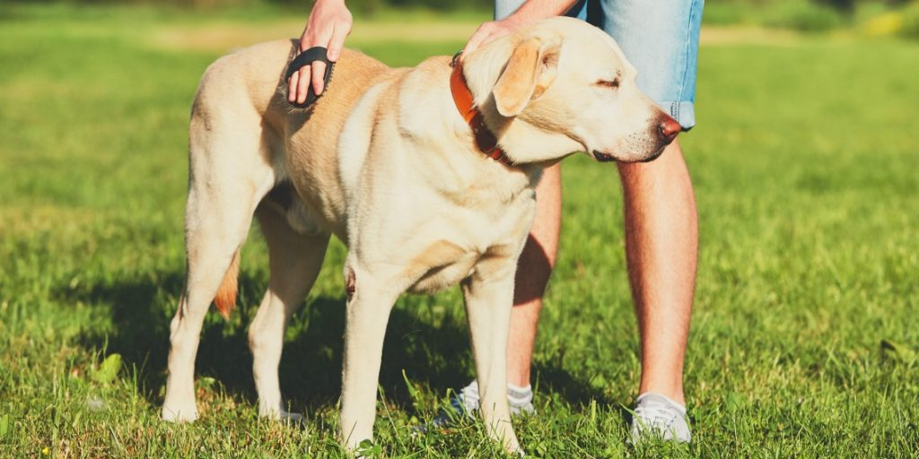 The Best Dog Dry Skin Remedies