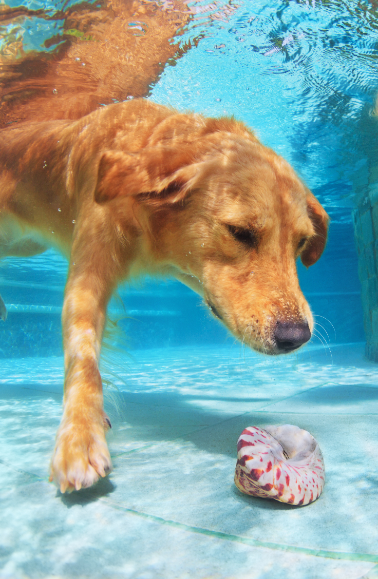 Joint-related problems are one of the most common issues owners face. Could canine hydrotherapy help your dog? What is it, anyway?