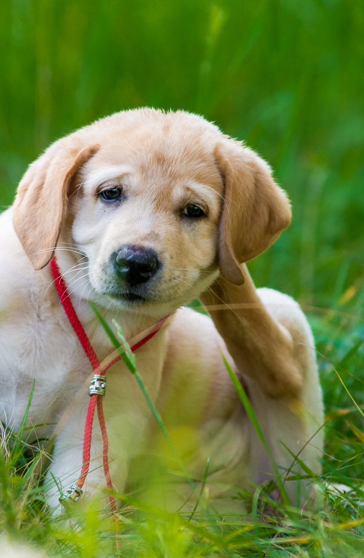 Itchy Pet?  Food Allergies May Be To Blame