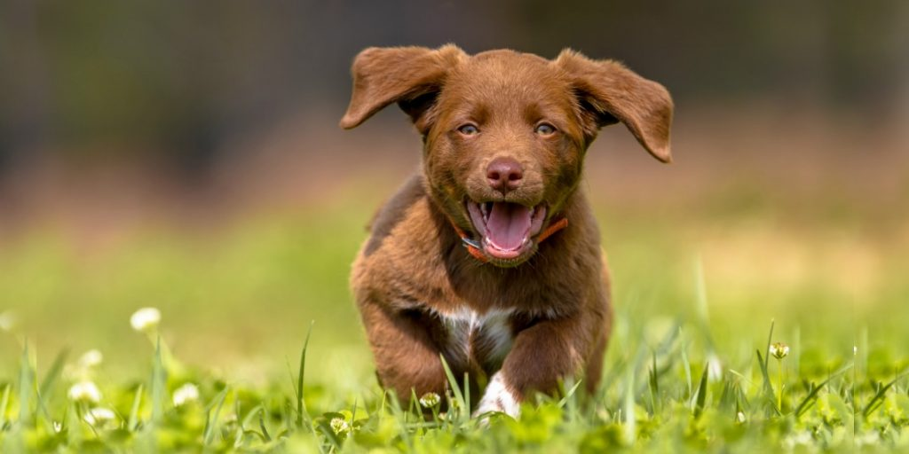 14 Fun Facts about Labrador Retriervers