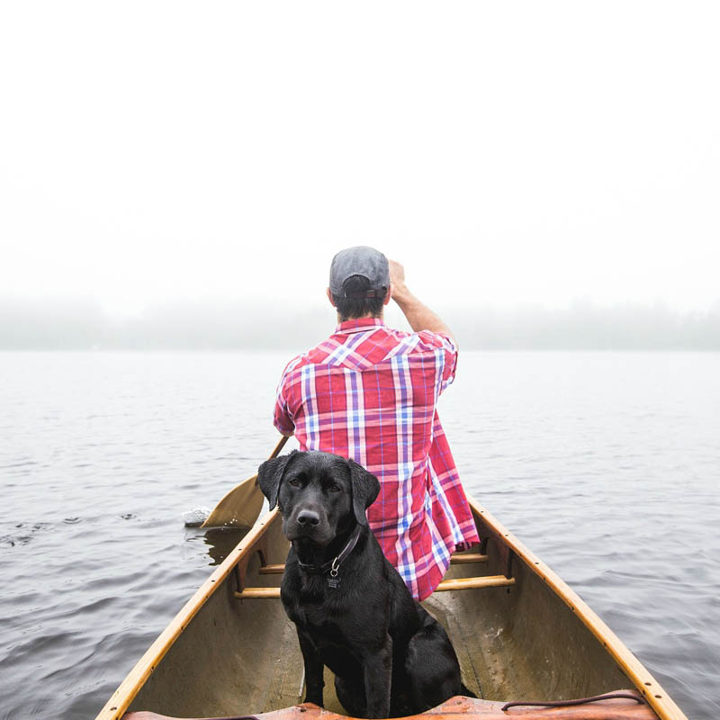 Labs Love To  Fish