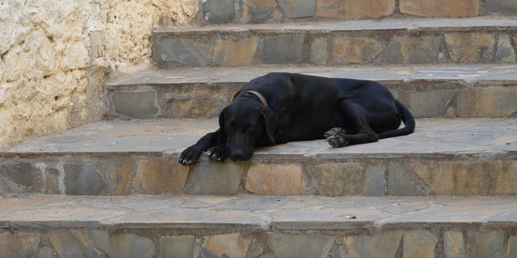 7 Natural Ways to Help Your Old Dog with Joint Problems