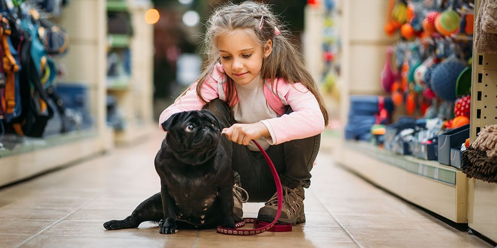 Six Things to Consider Before Buying a Puppy
