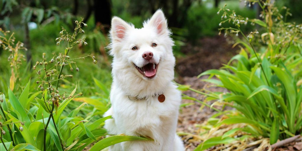 Your Dog's Immune Function: How to Help Build a Strong Foundation