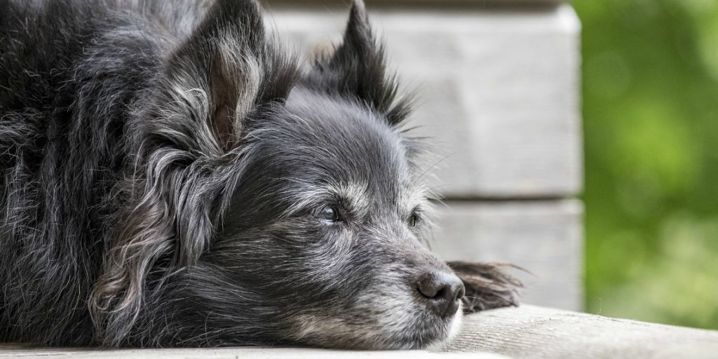 Is your dog just aging or is he sick?