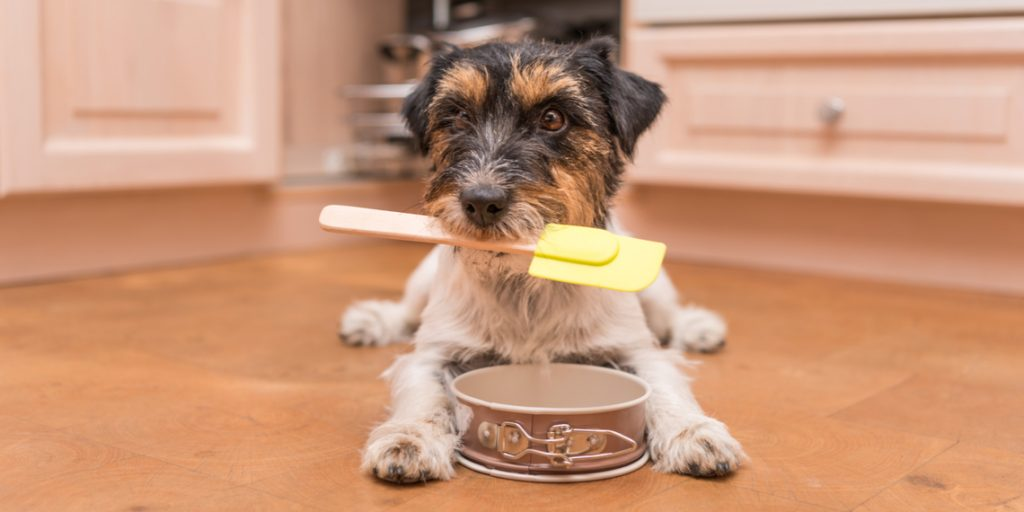 5 Delicious and Healthy Dog Food Recipes