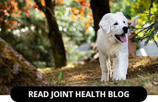 Dog Joint Health Blog