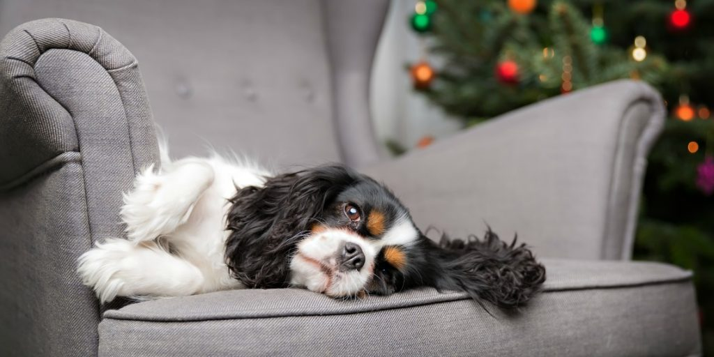The Twelve Dangers Of Christmas For Dogs